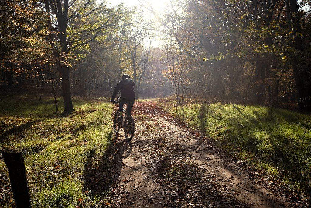 Mountainbike Bike Herbst Deutchland Berlin Brandenburg Döberitzer Heide