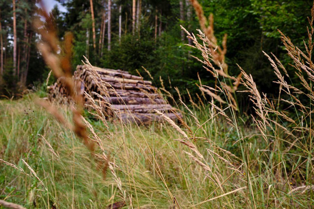 Wandern Fernwandern Forststeig Deutschland Elbsandstein