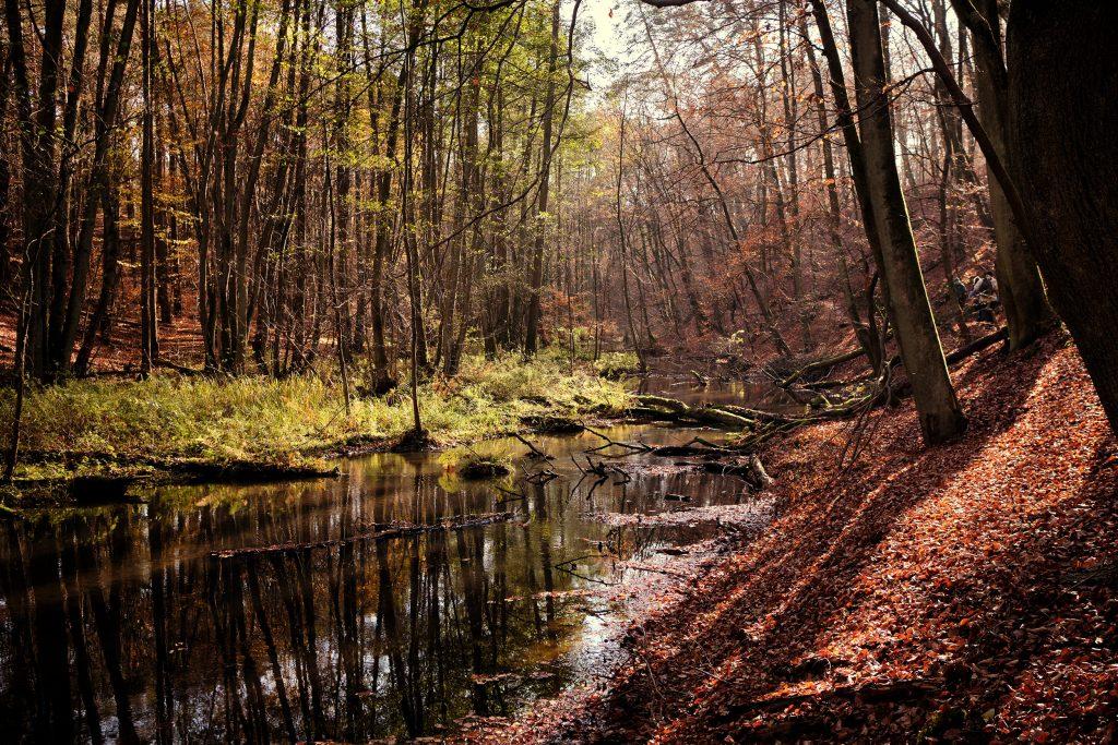 Herbst Wandern Deutschland Berlin Brandenburg Schlaubetal