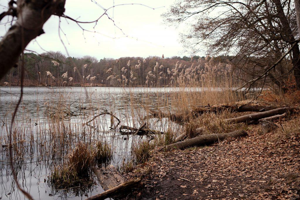 Brandenburg Hellsee Berlin Wandern Winterwandern Lanke