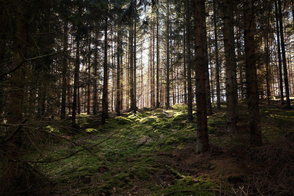 Uckermark Camping Hymer Wohmobil Wandern Sabinensee