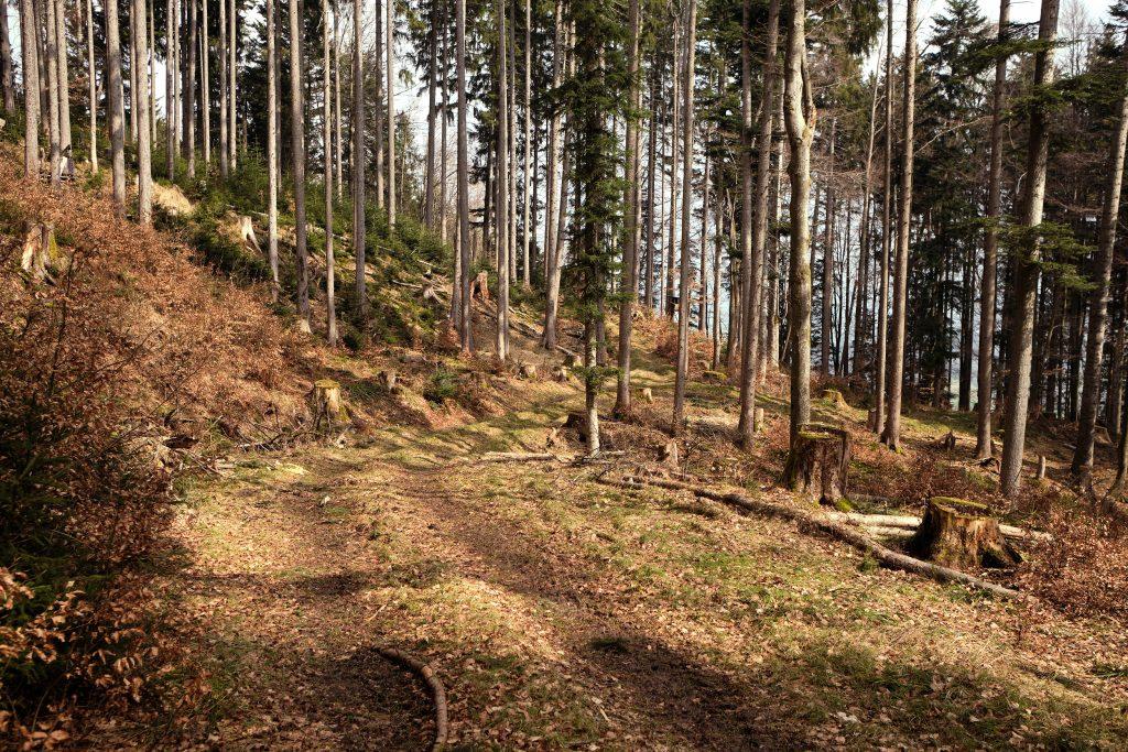 Tegernsee Bayern Wandern Hiking Outdoor Nature