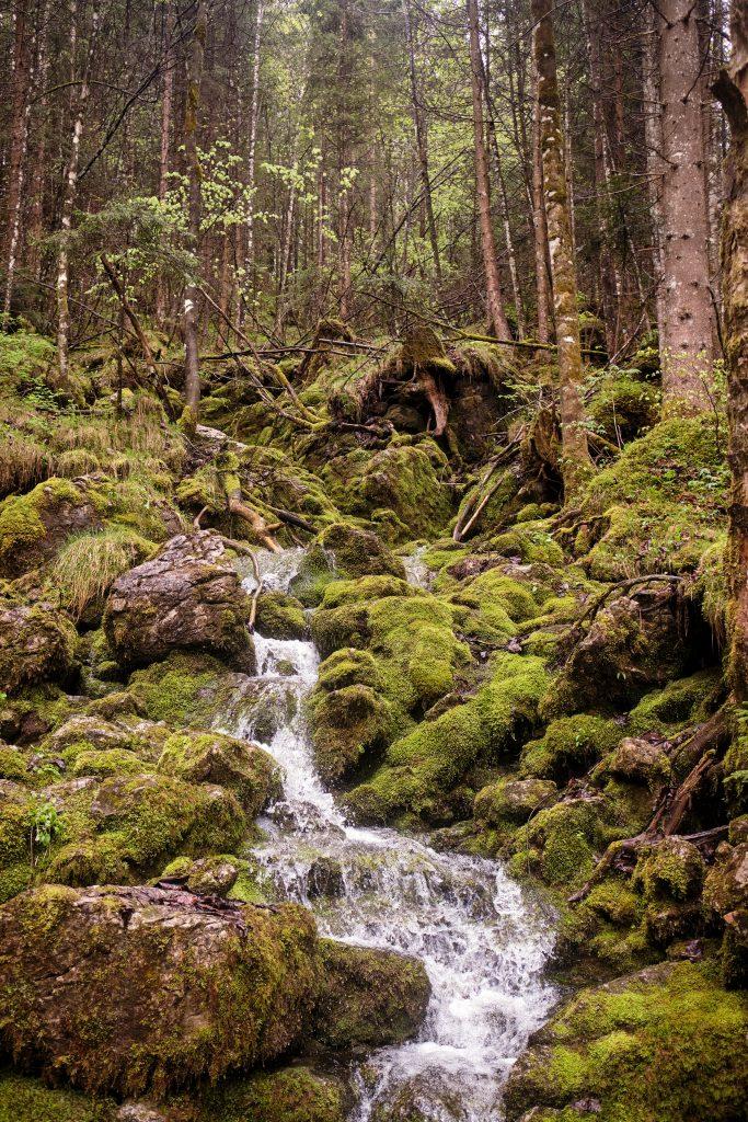Berchtesgadener Land Bayern Wandern Hiking Hintersee Zauberwald